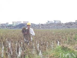 """""""Điều lạ"""" ở dự án chuyển đổi đất lúa khiến Chủ tịch Hà Nam bị kiện"""