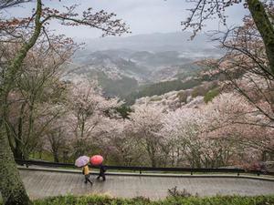 Đừng chỉ ngắm hoa anh đào, đến Nhật bạn nhất định phải đi hết những nơi này