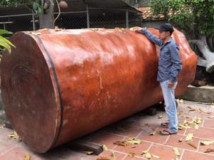 """""""Dung nhan"""" khúc gỗ dài 3m được đại gia Hải Phòng trả gần 4 tỷ đồng"""