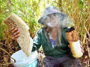 Kiên Giang: Đã mắt, phát thèm trước những tảng mật ong rừng U Minh
