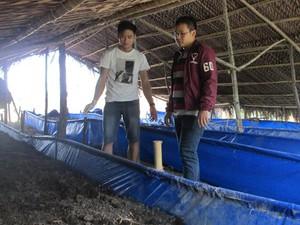 Kiên Giang: Bỏ công ty nước ngoài, trai đẹp họ Hứa về nuôi giun