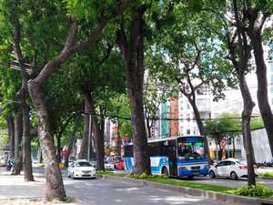 TP.HCM: Xử lý 63 cây xanh để xây cầu Thủ Thiêm 2 vào tháng tới