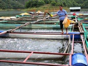 Làm giàu ở nông thôn: Bỏ 700 triệu xuống hồ thủy lợi, bắt cá lên lãi 1 tỷ/năm