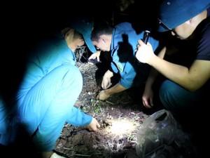 Băng rừng cao su săn nấm mối ở Bà Rịa-Vũng Tàu