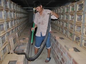 Ròng rã 20 năm nuôi rắn hổ mang-mãng xà cực độc ở Động Đạt