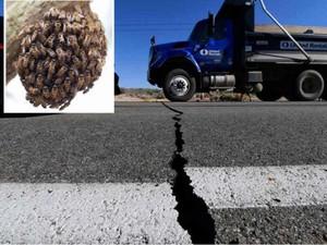 Động đất khủng khiếp ở Mỹ, hàng ngàn con ong chết hàng loạt