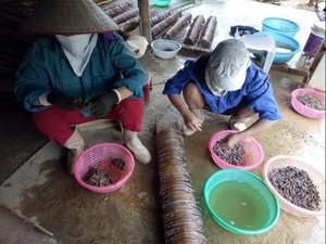 Lai Châu: Đổ xô bắt giun đất bằng kích điện, chính quyền khó xử