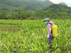 CropLife: Đã có đủ các công cụ để đối phó với sâu keo mùa thu