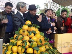 Cam Cao Phong cuối vụ mọng ngọt, thương lái đổ về mua tới tấp