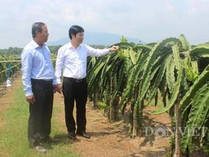 Trung Quốc cấm xuất khẩu tiểu ngạch, thanh long Bình Thuận gặp khó