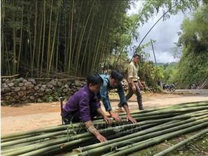 Cao Bằng: Vùng đất trồng trúc thẳng tắp đẹp như phim, dân đổi đời