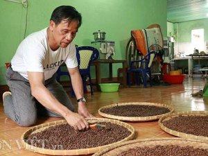 """Lâm Đồng: Trồng và làm ra thứ cà phê """"độc, lạ"""" bán 500 ngàn/ký"""