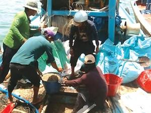 Bình Thuận: Chằng chằng là con gì mà tàu giã cào tận diệt?