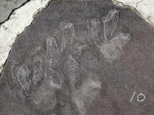 Phát hiện 140 dấu chân khủng long tại di tích cung điện nổi tiếng Trung Quốc