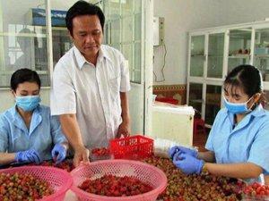 Lâm Đồng: Trồng loài cây ra quả đỏ mọng như son, bán 300 ngàn/ký