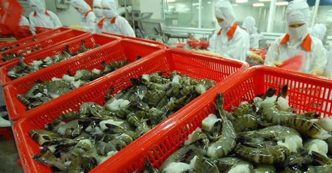 Trung Quốc cấm nhập khẩu tôm từ Ecuador, cơ hội lớn cho tôm Việt Nam. - Ảnh 3.