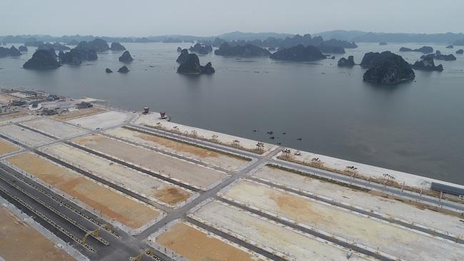 Khu đô thị Phương Đông Vân Đồn phải trồng keo phủ đất vì vắng dân - Ảnh 4.