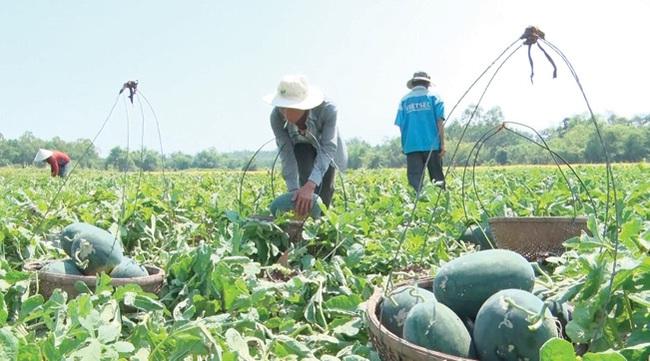 Xuất khẩu trái cây sang Trung Quốc, Bộ Công Thương khuyến cáo gì? - Ảnh 1.
