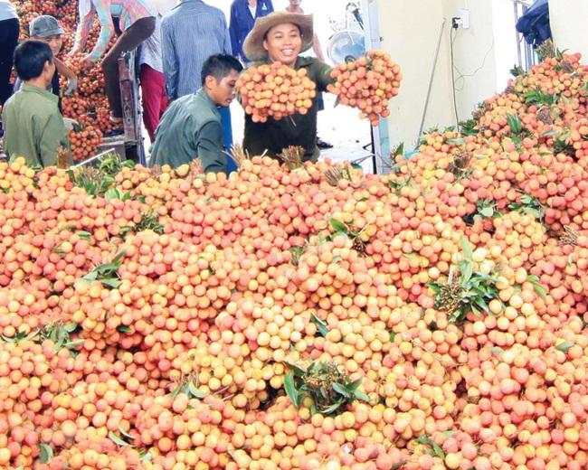 Xuất khẩu trái cây chính ngạch vẫn sang Trung Quốc thuận lợi - Ảnh 4.
