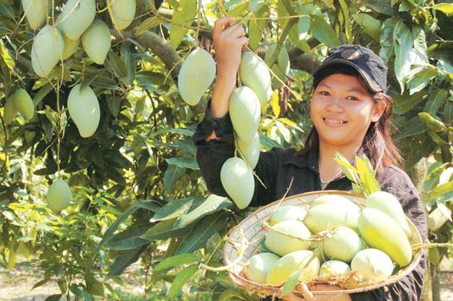 Xuất khẩu trái cây chính ngạch vẫn sang Trung Quốc thuận lợi - Ảnh 1.
