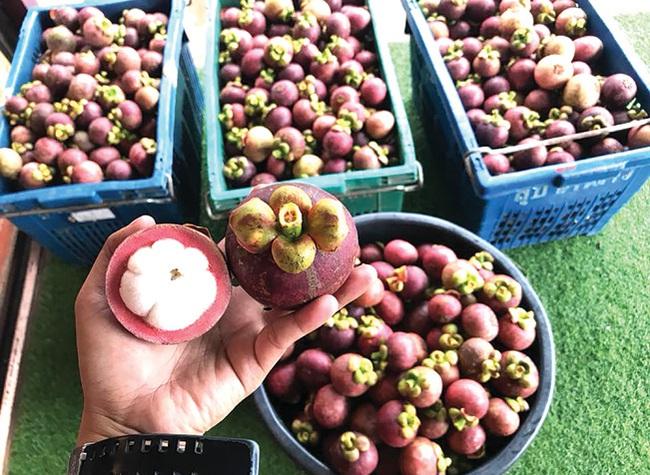Xuất khẩu trái cây chính ngạch vẫn sang Trung Quốc thuận lợi - Ảnh 2.