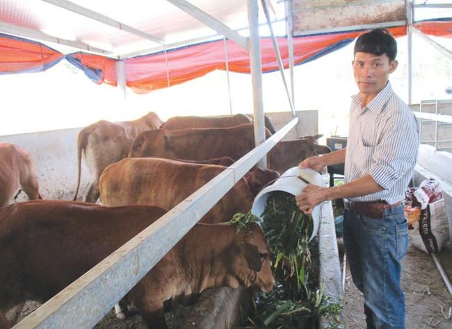Có vốn Agribank, 7X đầu tư trang trại chăn nuôi, thu 2 tỷ/năm - Ảnh 1.