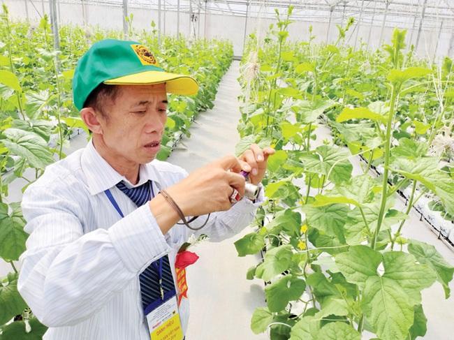 """Cùng nông dân khám phá """"đại bản doanh"""" trồng rau công nghệ cao - Ảnh 7."""
