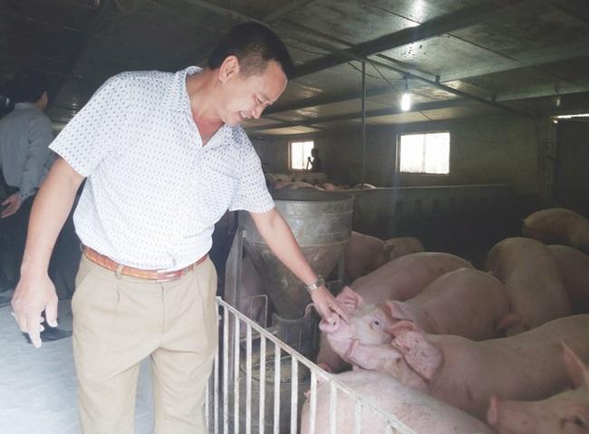 """An toàn sinh học – """"lời giải"""" giúp bà con chăn nuôi lợn bền vững - Ảnh 1."""