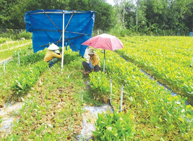 Xây dựng NTM ở Bình Trị: Đòn bẩy từ kinh tế rừng và trồng nấm - Ảnh 2.