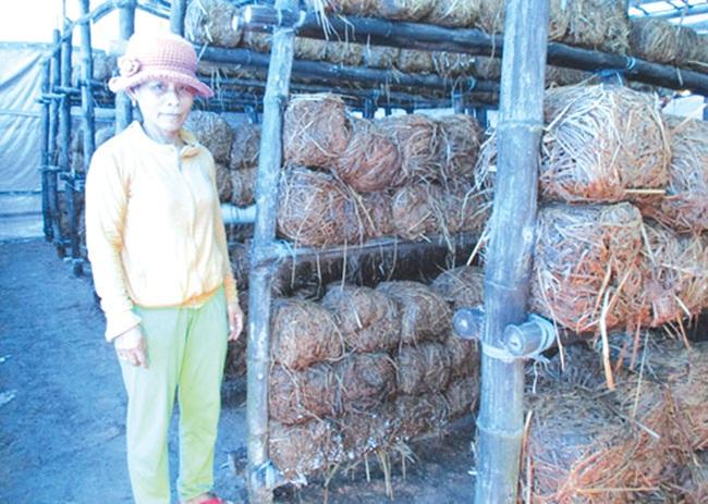 Xây dựng NTM ở Bình Trị: Đòn bẩy từ kinh tế rừng và trồng nấm - Ảnh 1.