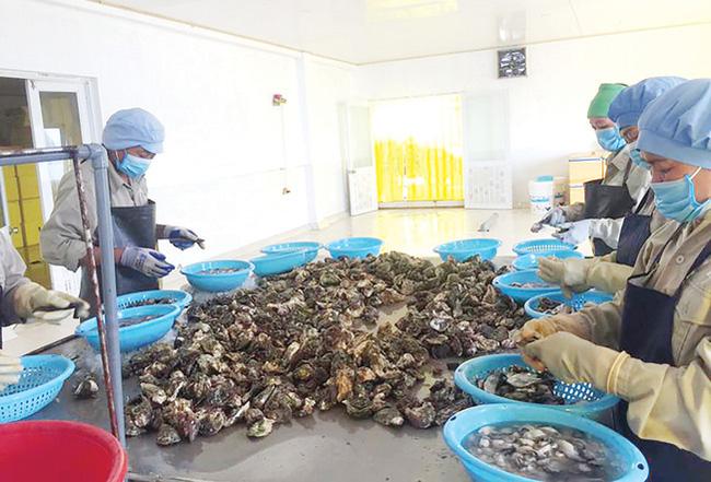 Cận cảnh quy trình nuôi hàu ngon nhất Việt Nam - Ảnh 6.