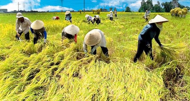 Gia nhập EVFTA: Nông dân phải là doanh nghiệp - Ảnh 2.