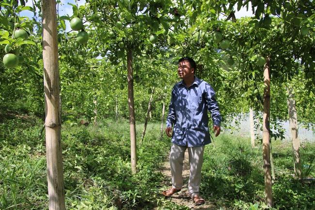 Hiệu quả từ phong trào nông dân thi đua sản xuất, kinh doanh giỏi ở Sơn La - Ảnh 4.