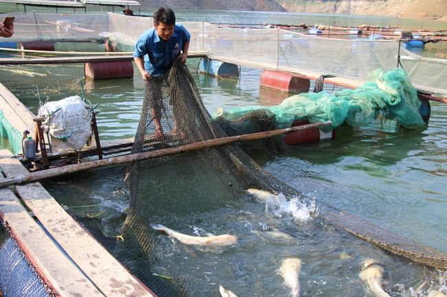 Hiệu quả từ phong trào nông dân thi đua sản xuất, kinh doanh giỏi ở Sơn La - Ảnh 3.