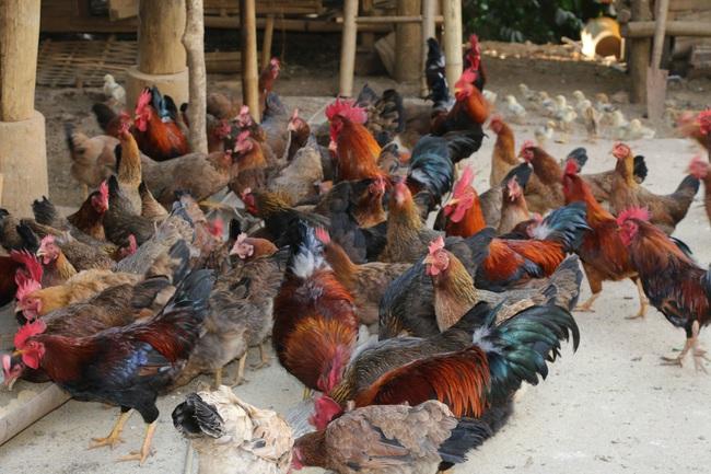 Hiệu quả từ phong trào nông dân thi đua sản xuất, kinh doanh giỏi ở Sơn La - Ảnh 6.