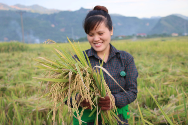 Hiệu quả từ phong trào nông dân thi đua sản xuất, kinh doanh giỏi ở Sơn La - Ảnh 5.