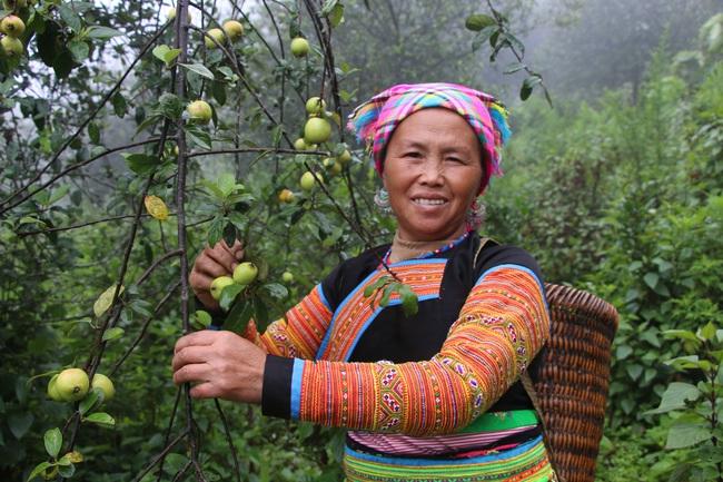 Hiệu quả từ phong trào nông dân thi đua sản xuất, kinh doanh giỏi ở Sơn La - Ảnh 2.