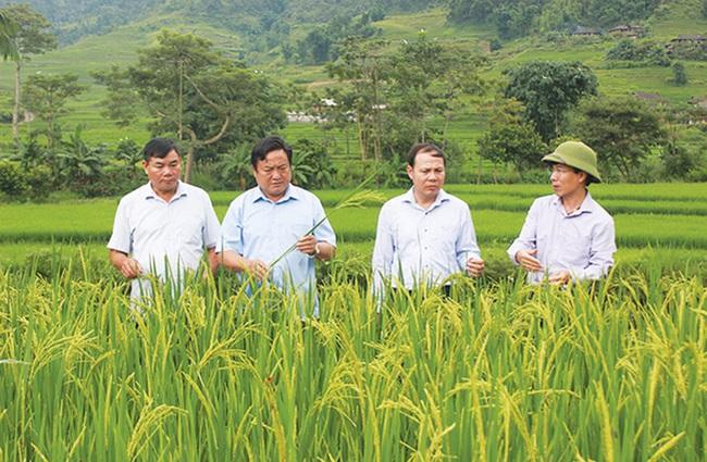 """Xã vùng cao Yên Bái """"thay da đổi thịt"""" từ xây dựng nông thôn mới - Ảnh 1."""