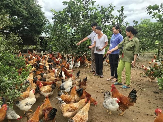 Những kết quả tiêu biểu sau 10 năm xây dựng NTM của tỉnh Quảng Ninh  - Ảnh 7.