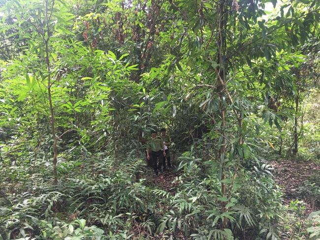 Hiệu quả công tác quản lý, bảo vệ rừng ở Sơn La - Ảnh 5.