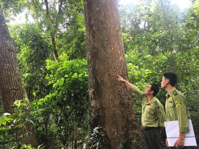Hiệu quả công tác quản lý, bảo vệ rừng ở Sơn La - Ảnh 2.