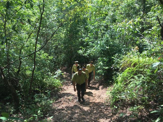 Hiệu quả công tác quản lý, bảo vệ rừng ở Sơn La - Ảnh 3.