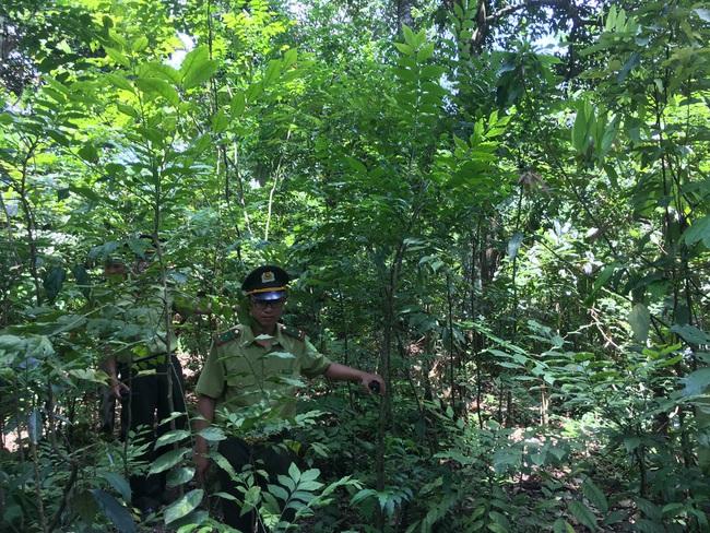Hiệu quả công tác quản lý, bảo vệ rừng ở Sơn La - Ảnh 1.