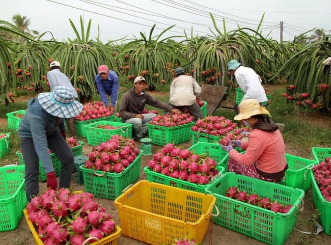 EVFTA tăng cơ hội cho xuất khẩu nông sản Việt - Ảnh 1.