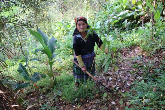 Mường La xóa đói giảm nghèo từ trồng cây dược liệu - Ảnh 3.