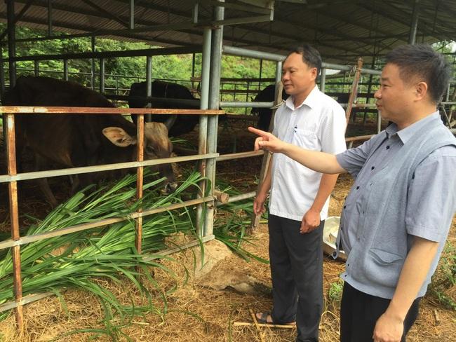Sẽ bàn giao đàn bò tót lai F1 cho Vườn Quốc gia Ninh Thuận - Ảnh 1.