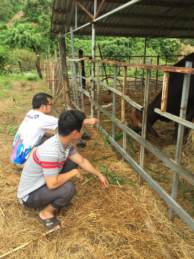 Sẽ bàn giao đàn bò tót lai F1 cho Vườn Quốc gia Ninh Thuận - Ảnh 2.