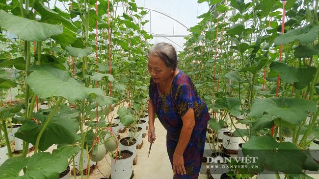 Trồng dưa lưới trong nhà màng, nông dân Hà Tĩnh chỉ việc đếm quả thu tiền - Ảnh 5.