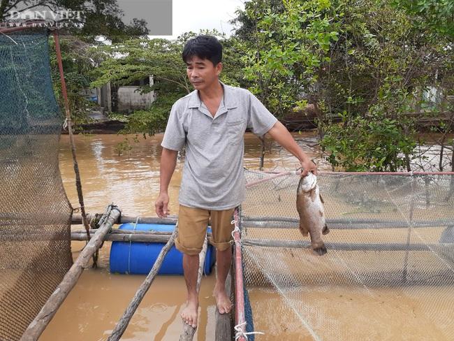 """Quảng Bình: Người dân """"khóc ròng"""" nhìn hàng chục tấn cá lồng chết sau mưa lũ - Ảnh 3."""