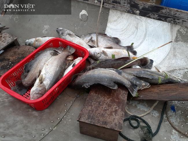 """Quảng Bình: Người dân """"khóc ròng"""" nhìn hàng chục tấn cá lồng chết sau mưa lũ - Ảnh 4."""
